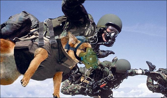 Can A Muslilm Own A Dog